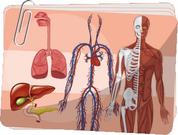 Organizm człowieka - Organy i układy budujące organizm człowieka - Ćwiczenia interaktywne z przyrody dla klasy 4